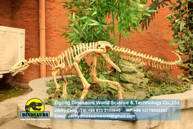 Life Size Realistic Eoraptor Skeleton in dinosaurs factory DWS031