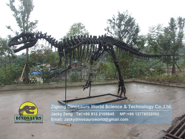 Restored dinosaur skeleton model Allosaurus Skeleton DWS038
