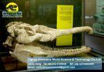 Dinosaurs fossils replica (Phytosaurus fossil) DWF001