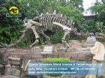 Dinosaur skeleton replica art toys Stegosaur Skeleton DWS004