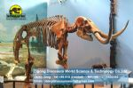 Prehistoric mammoth animal skeleton model for Museum DWS005