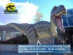 Best dinosaurs factory showroom dinopark dinosaurs ( Albertosaurus ) DWD026