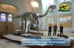 Buried discovery science dinosaurs skeleton Shunosaurus DWS018
