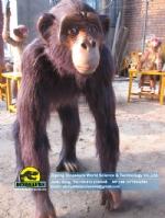Animatronic animals Life Size Chimpanzee DWA125