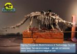 Showroom Science dinopark dinosaurs skeleton replica DWS011