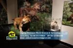 Prehistoric animals Permian animals Estemmenosuchus DWA1790-1