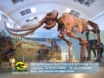 National museum simulation mammoth skeleton DWS028