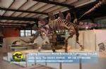 Museum stegosaurus simulation dinosaur skeleton model DWS029