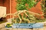 Life Size Realistic Eoraptor Skeleton in dinosaurs factory DWS031