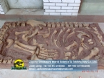 Jingshanosaurus fossil Natural size dinosaur fossil For Museum DWF012