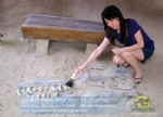 Children archaeological fun, T-Rex skull buried Status DWF013