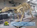 Science education model Simulation Hadrosaurs Skeleton Replica DWS019-2