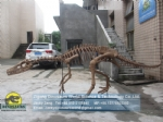 High-quality teaching model artificial Eoraptor skeleton DWS032