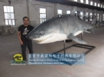 Chinese Customer Ordered One 6m long Animatronic Shark for his Ocean Attraction Exhibition DWA139
