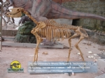 Museum of Paleontology custom Hipparion reproductions DWS033