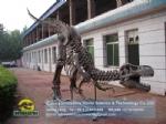 Complete Tyrannosaurus rex skeleton replicas of dinosaur museum DWS034