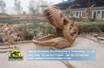 Museum showroom artificial fossils tyrannosaurus rex skull replica DWF015