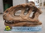 Large artificial dinosaur fossils yangchuanosaurus skull replicas ZD09